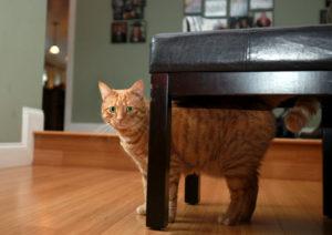 Cats Are Assholes - A photo Calendar Story