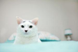 cat photography nj