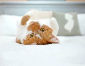 photo of cat on bed