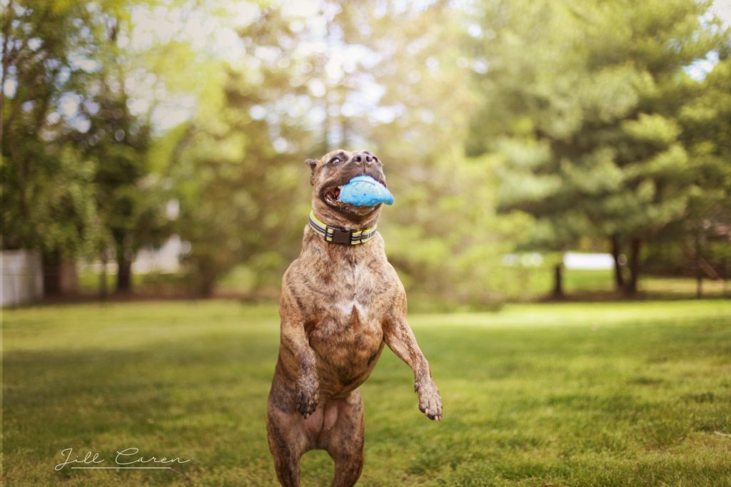dog catching ball photo