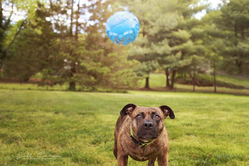 dog watching ball photo