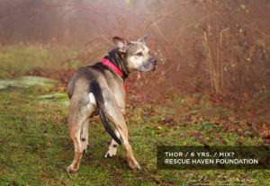 NJ dog for adoption Thor