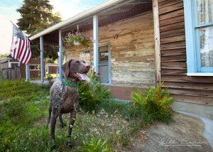Pippa at Nothnagle Log Cabin